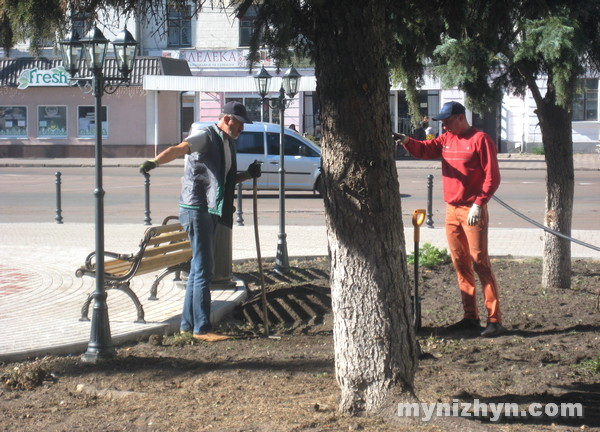 самшити, ялівці, площа Франка, озеленення