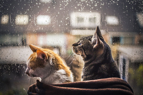 погода, синоптики, похолодання